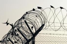 birdrazorwire
