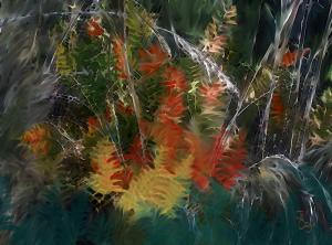 """""""Study: Ferns"""""""