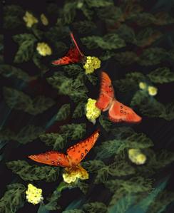 """Three Butterflies"""""""
