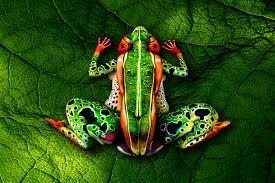 The Frog Johannes Stotter
