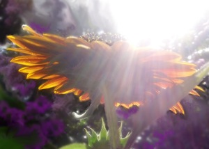 Sun and Flower
