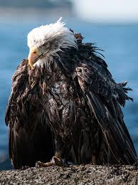Ill eagle. Poor baby.
