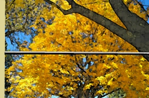 Yellow Maple painting by Je'