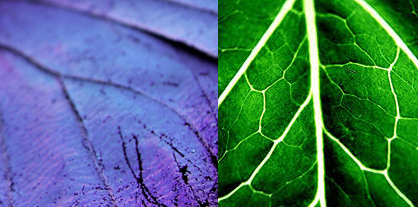 Butterfly wing and leaf