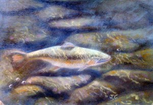 Trout Shallow water Pastel by Je'