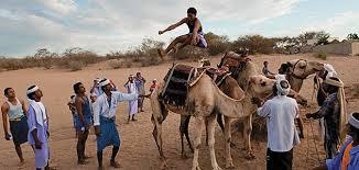 Go Camel Jumper!