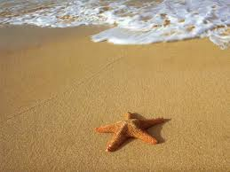 A Starfish Named Neena